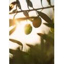 Olives & oil