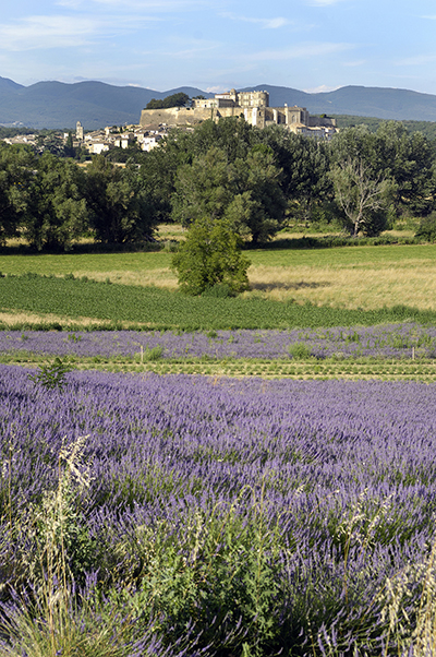 village of grignan in lavander fields front of the clair de la plume hotel